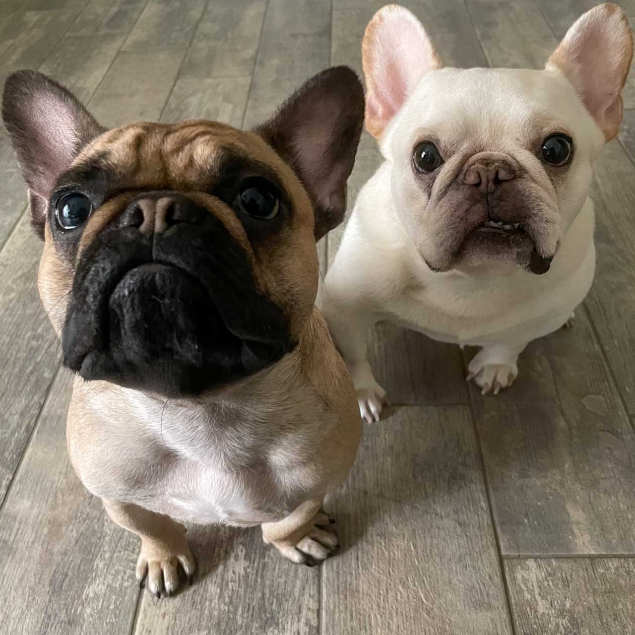 Penny-and-Bunsen
